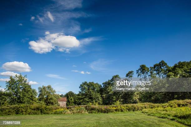 trees on field against blue sky - marty hardin stock photos and pictures
