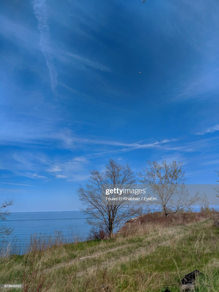 Trees On Field Against Blue Sky : Stock Photo