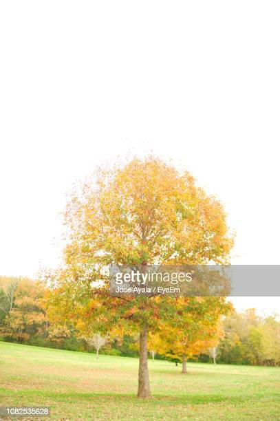 trees on field against clear sky during autumn - jose ayala stock pictures, royalty-free photos & images