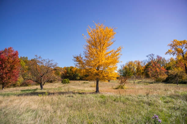 Trees on field against clear sky during autumn,Sperry Rd,United States,USA