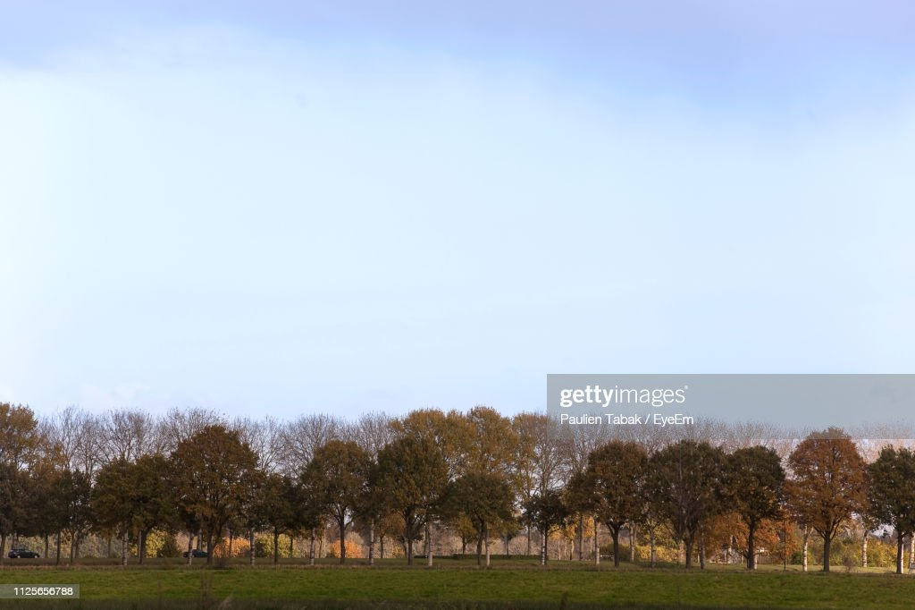 Trees On Field Against Clear Sky : Stockfoto