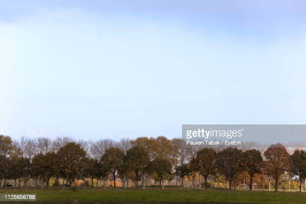 trees on field against clear sky - paulien tabak stock pictures, royalty-free photos & images