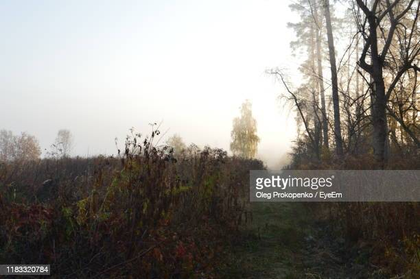 trees on field against clear sky - oleg prokopenko stock pictures, royalty-free photos & images