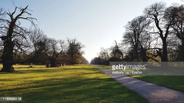 trees on field against clear sky - liu he stock pictures, royalty-free photos & images