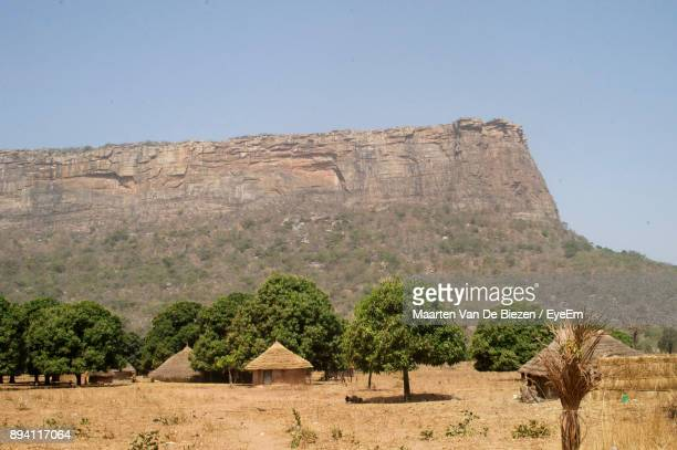 trees on field against clear sky - guinea stock pictures, royalty-free photos & images