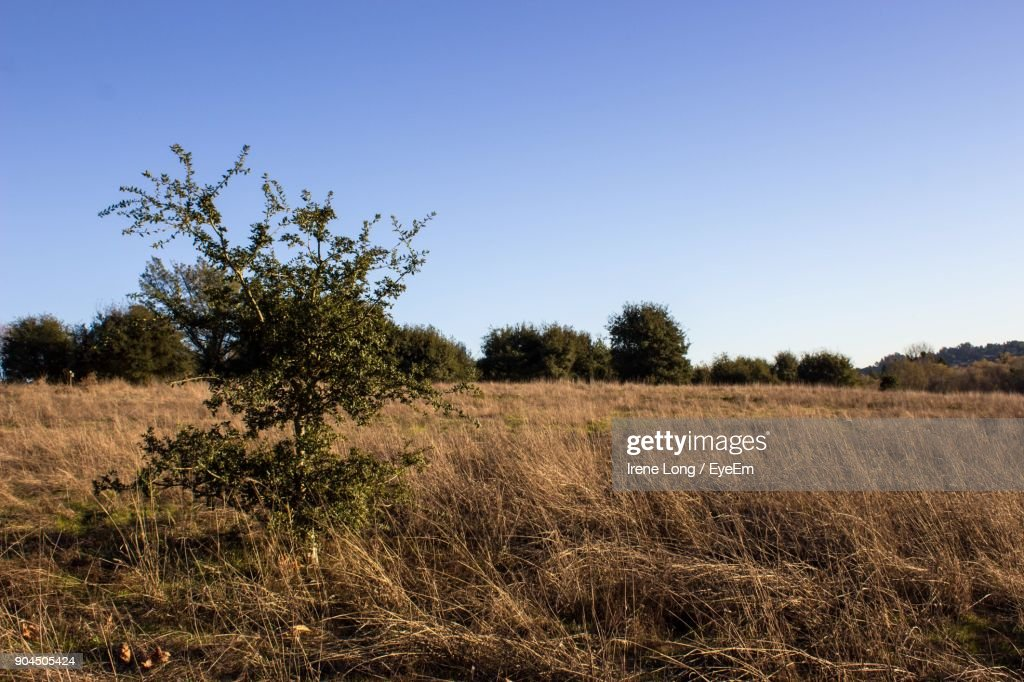 Trees On Field Against Clear Sky : Photo