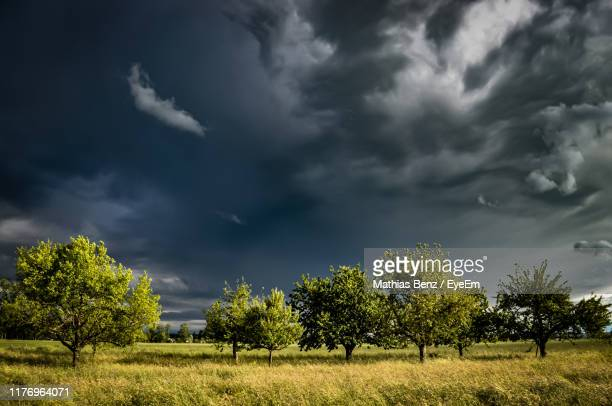 trees on field against cloudy sky - wetter stock-fotos und bilder