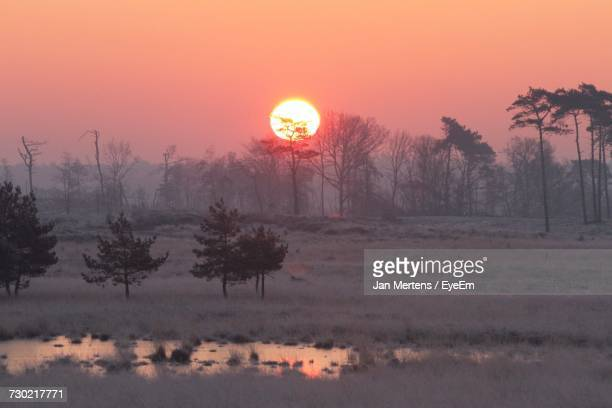 trees on field against orange sky during sunset - mertens stock pictures, royalty-free photos & images