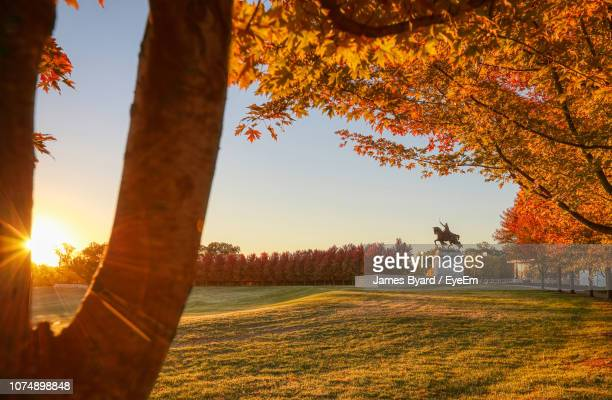 trees on field against sky during autumn - st. louis missouri stock pictures, royalty-free photos & images