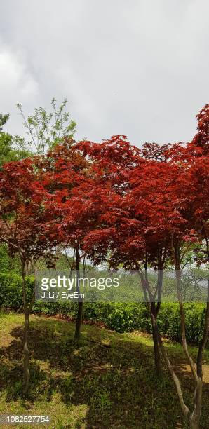 trees on field against sky during autumn - bucheon stock pictures, royalty-free photos & images