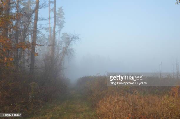 trees on field against sky during autumn - oleg prokopenko stock pictures, royalty-free photos & images
