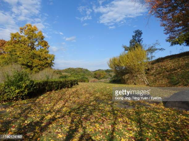 trees on field against sky during autumn - asuka stock pictures, royalty-free photos & images