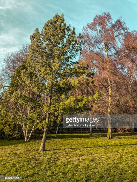 trees on field against sky during autumn - wind stock pictures, royalty-free photos & images