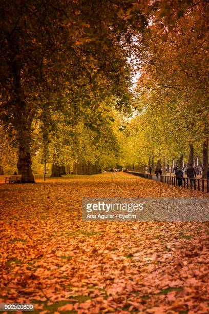 trees on field against sky during autumn - hyde park london stock pictures, royalty-free photos & images