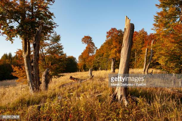 trees on field against sky during autumn - marek stefunko stock photos and pictures