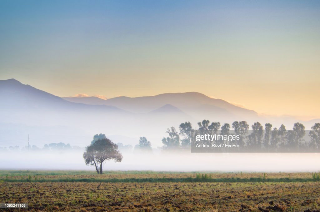 Trees On Field Against Sky During Foggy Weather : Foto stock