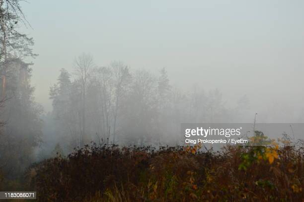 trees on field against sky during foggy weather - oleg prokopenko stock pictures, royalty-free photos & images