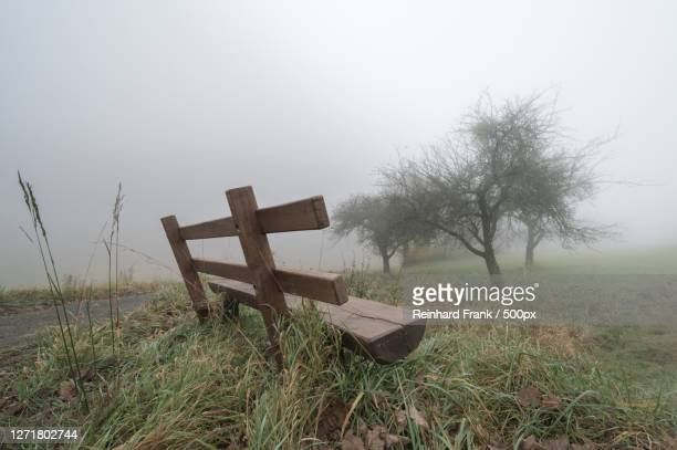 trees on field against sky during foggy weather, reichelsheim, germany - baum imagens e fotografias de stock
