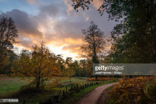 trees on field against sky during sunset, bracknell, united kingdom - berkshire england stock pictures, royalty-free photos & images