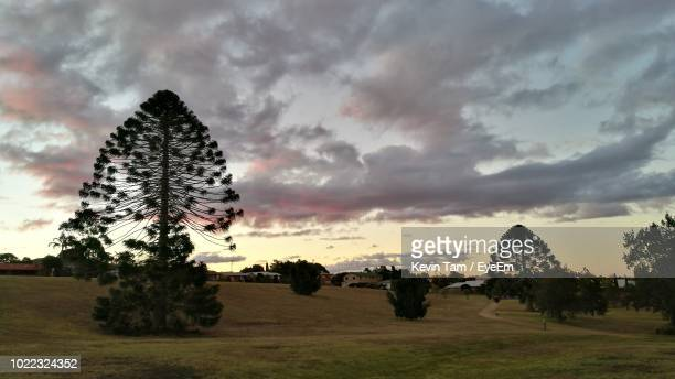 trees on field against sky during sunset - eyeem kevin tam stock pictures, royalty-free photos & images