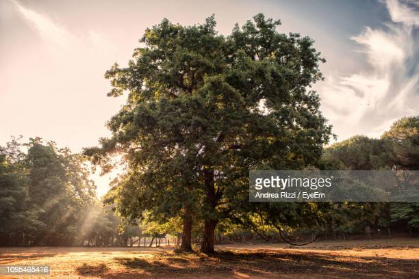 trees on field against sky during sunset - andrea rizzi stock pictures, royalty-free photos & images