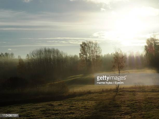 trees on field against sky during sunset - espoo stock pictures, royalty-free photos & images