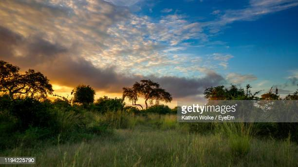 trees on field against sky during sunset - wolke stock pictures, royalty-free photos & images