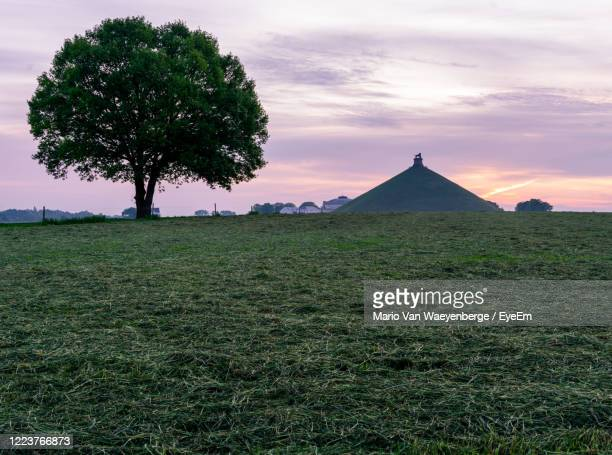 trees on field against sky during sunset - waterloo belgium stock pictures, royalty-free photos & images