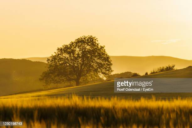 trees on field against sky during sunset - hill stock pictures, royalty-free photos & images