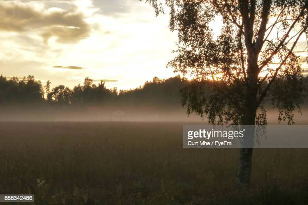 trees on field against sky during sunset - dalsland stock photos and pictures