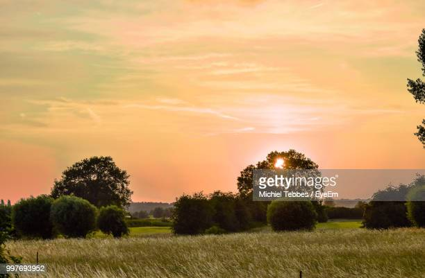 trees on field against sky during sunset - overijssel stock photos and pictures