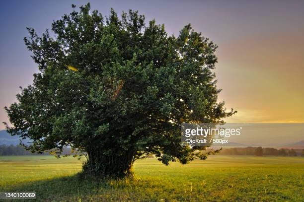 trees on field against sky during sunset,austria - baum stock pictures, royalty-free photos & images