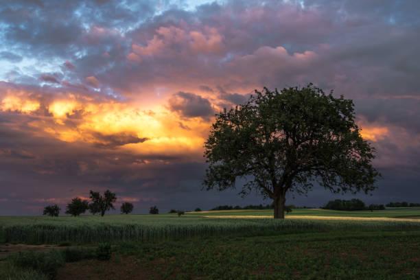 Trees on field against sky during sunset,Vaihingen an der Enz,Germany
