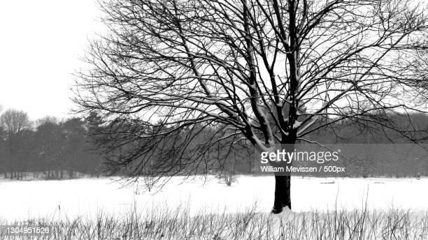 trees on field against sky during winter,vlakwater,venray,netherlands - william mevissen stockfoto's en -beelden
