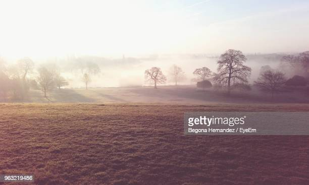 trees on field against sky in foggy weather - doncaster stock pictures, royalty-free photos & images