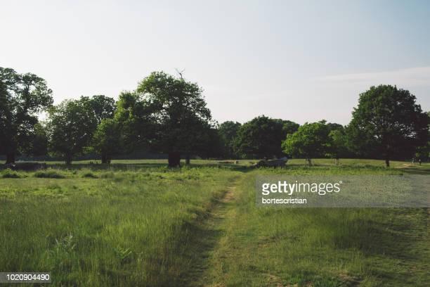 trees on field against sky - bortes stock-fotos und bilder