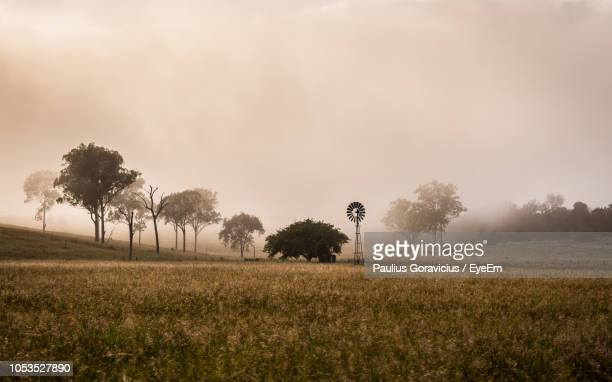 trees on field against sky - maroon stock pictures, royalty-free photos & images