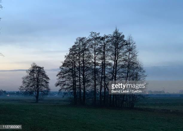 trees on field against sky - liebe stock pictures, royalty-free photos & images