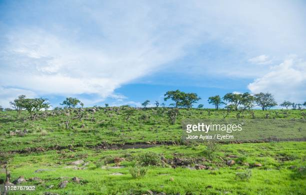 trees on field against sky - jose ayala stock pictures, royalty-free photos & images