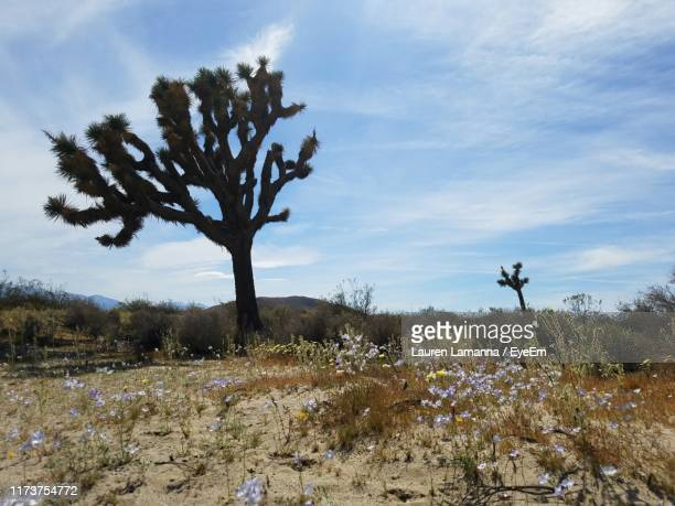 trees on field against sky - el mirage dry lake stock photos and pictures