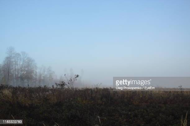 trees on field against sky - oleg prokopenko stock pictures, royalty-free photos & images