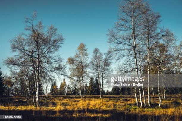 trees on field against sky - kahler baum stock-fotos und bilder