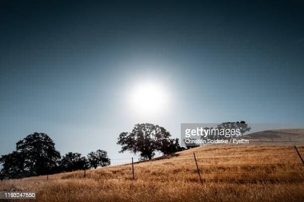 trees on field against sky - christian soldatke stock pictures, royalty-free photos & images