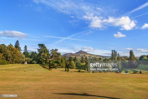 trees on field against sky - boris stock pictures, royalty-free photos & images