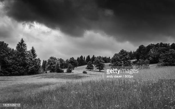 trees on field against sky - andy dauer stock pictures, royalty-free photos & images