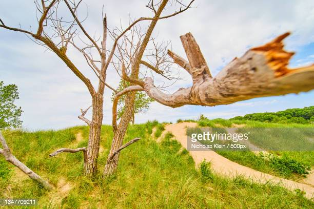 trees on field against sky - klein stock pictures, royalty-free photos & images