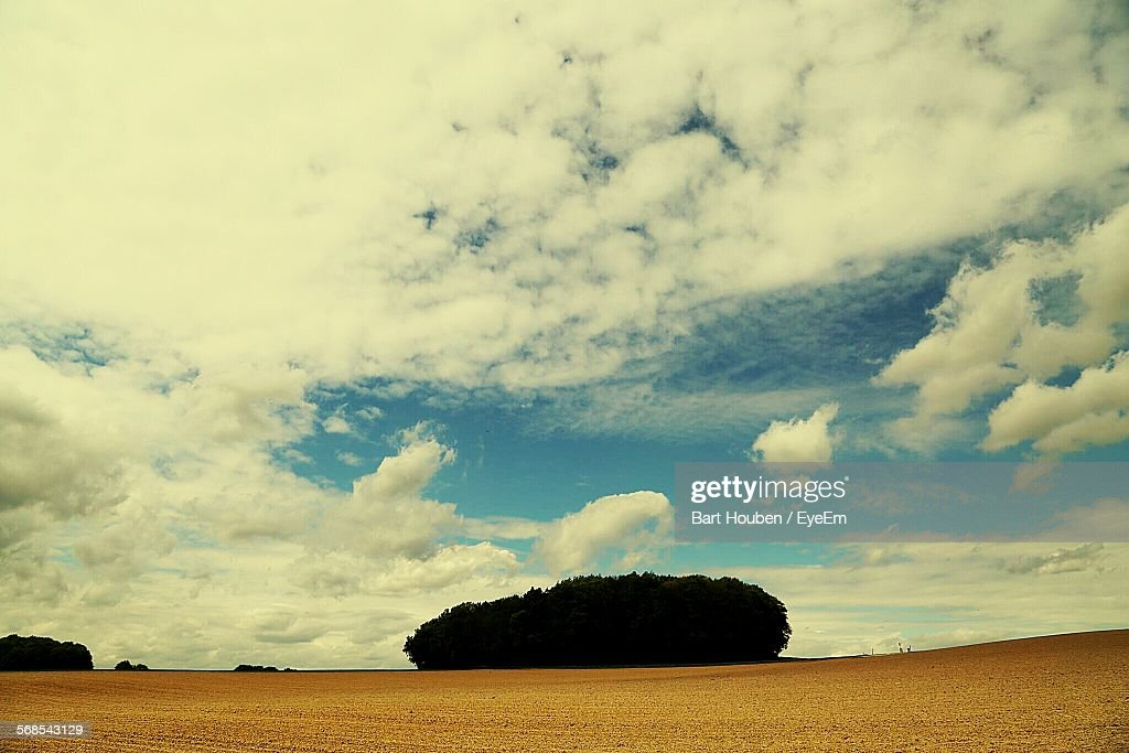 Trees On Field Against Sky : Stock Photo