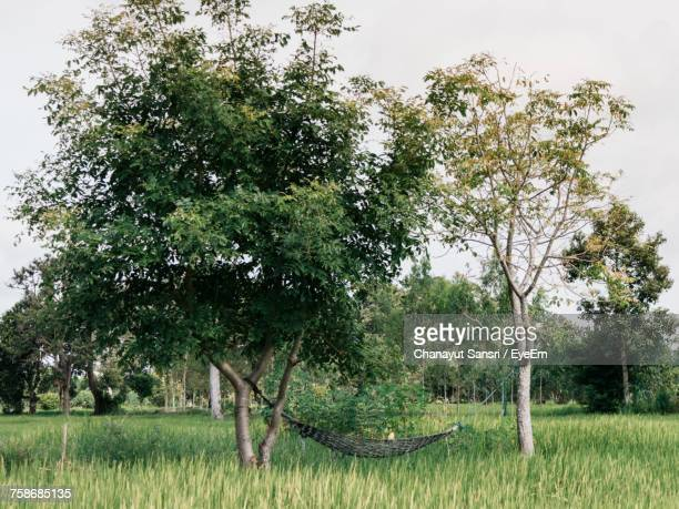 trees on field against sky - chanayut stock photos and pictures