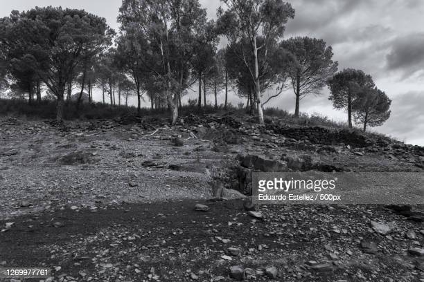 trees on field against sky, zarza de granadilla, spain - blanco y negro stock pictures, royalty-free photos & images