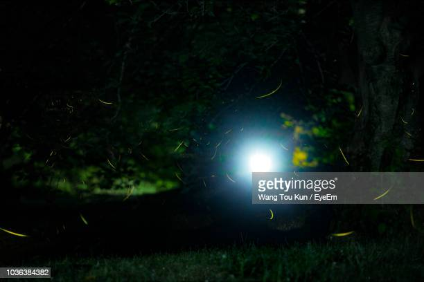 trees on field at night - glowworm stock pictures, royalty-free photos & images